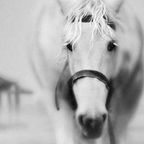 Equine Shakti Horse Healing Massage Bodywork Shaman